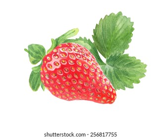 Strawberry with leaves. Watercolor illustration.