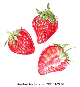 Strawberry. Sketch of berries with colored pencils on a white background.