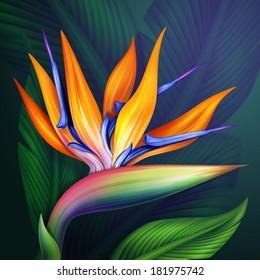strelitzia bird of paradise exotic flower, botanical illustration
