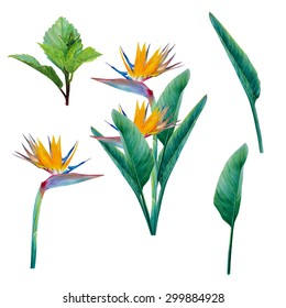 Strelitzia flowers watercolor composition and isolated leaves and flower set. Hand-drawn picture. Floral bouquet. Exotic plants. Tropical element. Painted with a brush on paper image. Hibiscus leaf