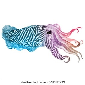 Striped cuttlefish ink watercolor drawing