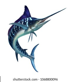Striped marlin on white, fish sword. Realistic isolated illustration.