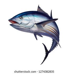Striped tuna fish, Skipjack Tuna, Katsuwonus pelamis. Realistic isolated illustration.