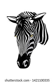striped wild african zebra portrait