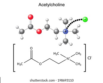 Structural chemical formula and model of acetylcholine with chloride ion, 2D & 3D Illustration, isolated on white background