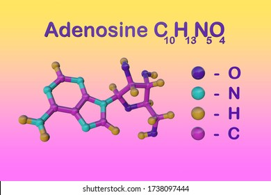 Structural chemical formula and molecular model of adenosine, one of four nucleoside building block of RNA, which is essential for all life. Scientific background. 3d illustration