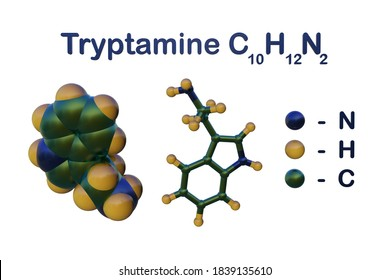 Structural chemical formula and molecular model of tryptamine, a monoamine alkaloid, structurally similar to the amino acid tryptophan. Scientific background. 3d illustration