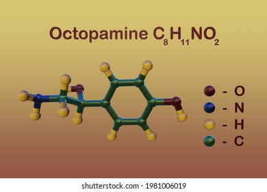 Structural chemical formula and molecular model of octopamine, a biogenic monoamine that acts as a neurohormone, a neuromodulator and a neurotransmitter in invertebrates. 3d illustration