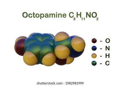 Structural chemical formula and space-filling molecular model of octopamine, a biogenic monoamine, structurally related to noradrenaline. Scientific background. 3d illustration