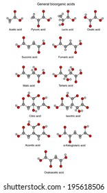 Structural chemical formulas of bioorganic acids: acetic, pyruvic, lactic, succinic, fumaric, malic, tartaric, oxalic, oxaloacetic, ketoglutaric, citric, isocitric, aconitic, isolated, rounds, sticks