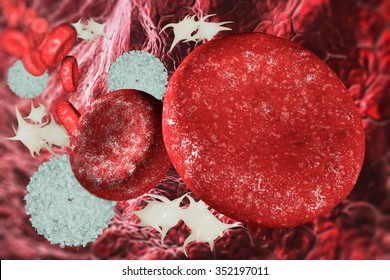 structure of the blood cells in the blood vessel