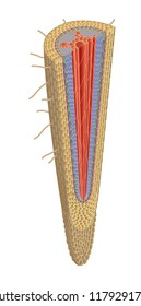 Structure of plant root