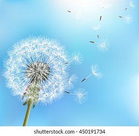 Stylish nature blue background with flower dandelion blowing seeds. Trendy floral summer or spring wallpaper. Raster illustration