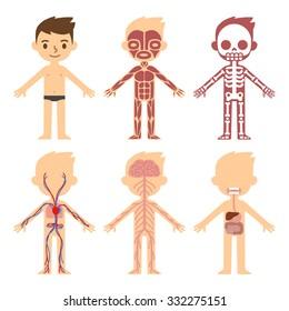 My Body Educational Anatomy Chart Kids Stock Vector (Royalty Free ...