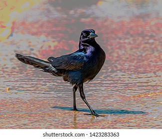 Stylized picture of a Grackle strutting on the beach.
