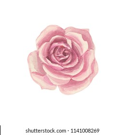 Stylized pink rose flower, for compositions on the wedding theme. Done in watercolor.