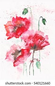 Stylized Poppy flowers illustration. watercolor
