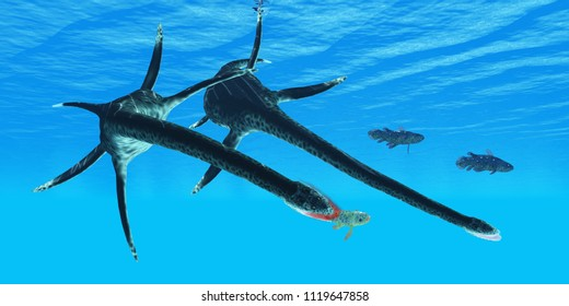 Styxosaurus Reptile hunts Coelacanth Fish 3D illustration - An unlucky Coelacanth fish becomes prey to a marine reptile called Styxosaurus during the Cretaceous Period of North America.