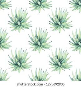 Aloe Vera Plant On White Background Stock Illustration 1037954689