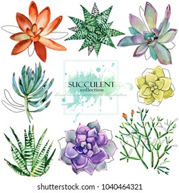 succulent plant collection. Hand drawn watercolor floral set illustration