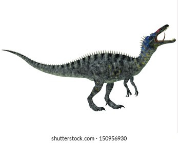 Suchomimus on White - Suchomimus was a large Spinosaurid dinosaur with a crocodilian-like set of jaws. It lived in the Cretaceous Period in Africa, when the Sahara was a lush swampy habitat.