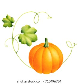Squash Vegetable Images Stock Photos Vectors Shutterstock