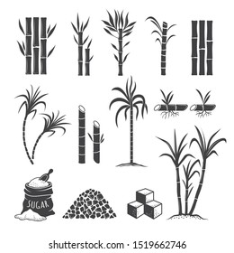 Sugarcane farm symbols. Sweets field plant harvest milling colored illustrations isolated on white background