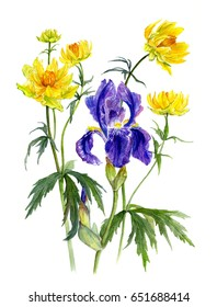 Summer bouquet - iris and Trollius chinensis. Sketch. Watercolor hand drawing illustration, isolated