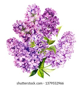 summer bouquet, lilac flowers on white isolated background, watercolor painting, hand-drawing black, invitation