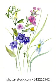 Summer bouquet, watercolor - bells, Phlox clover daisies isolated