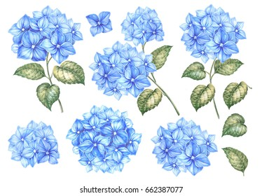 Summer collection of hydrangea flowers. Awesome blue flowers set. Pack for marriage, wedding or invitation cards. Blooming flowers watercolor illustration isolated over white background.