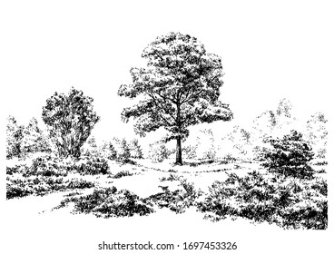 Summer forest scene with trees and grass. Black and white hand drawing with pen and ink. Engraving, etching, old sketch style.