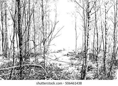 A summer forest view. Pen and ink black and white drawing.