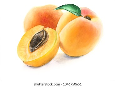 Summer fruit apricot