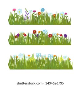 Summer grass with wild beautiful flowers borders. Color flower and green field, meadow beauty blossom illustration