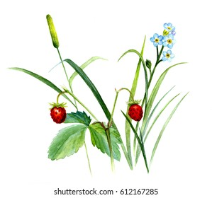 Summer plant composition, with grass, wild strawberries and forget-me-not. Watercolor sketch, isolated