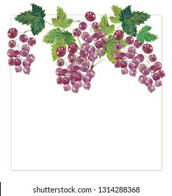 summer red berries leaves currant vitamin food juicy useful watercolor texture isolated on white frame vintage natural cketch