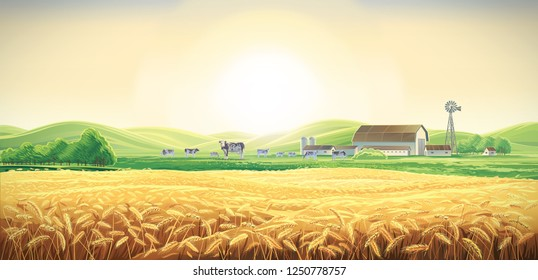Summer rural landscape with cows and farm, and wheat field, dawn above hills.
