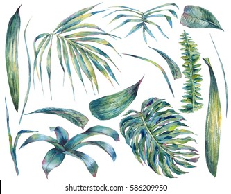 Summer set of exotic watercolor green tropical leaves, botanical natural collection, isolated illustration