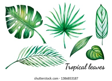 Summer set of tropical leaves. Monstera, palm. Watercolor painting. Exotic plant. Natural print. Sketch drawing. Botanical composition. Greeting card. Painted background. Hand drawn illustration.