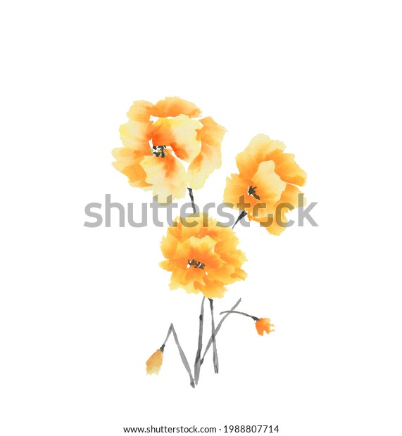 Summer yellow flowers on a white background. Isolated. Watercolor