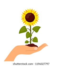 Sunflower cartoon in hand isolated on a white background. Summer agriculture flat style illustration