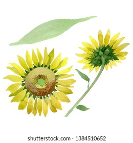 Sunflower floral botanical flowers. Wild spring leaf wildflower isolated. Watercolor background illustration set. Watercolour drawing fashion aquarelle. Isolated sunflower illustration element.