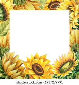 sunflower flower illustration frame drawing isolate on white background