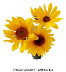 sunflower flower in small ceramic vase isolated on white digital painting