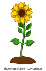 Sunflower with green leaves in flat style isolated on white background