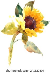 Sunflower Hand Painted Watercolor Illustration on white background Flower Floral
