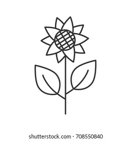 Sunflower, helianthus linear icon. Flowering plant thin line illustration. Agriculture contour symbol. Raster isolated outline drawing