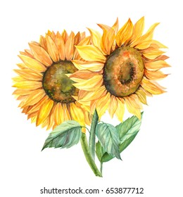 sunflower illustration in watercolor, bouquet, hand paint.