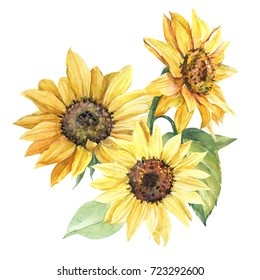 sunflower illustration in watercolor drawing, bouquet, hand paint.